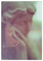 Sublime (peterphotographic) Tags: pa071097ed1cb21958edwm olympus em5mk2 microfourthirds peterhall prime camerabag2 cityoflondoncemetery eastlondon wanstead aldersbook london england uk britain cemetery tomb tombstone grave graveyard memorial angel autumn depthoffield dof sublime leaf statue f14