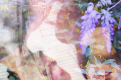 34 (zakchalmers) Tags: exposure overlay 34 wisteria smile dof 50mm canon t2i green plant nature art