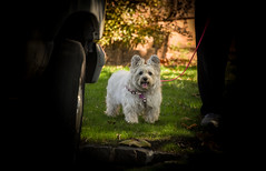 my light at the end of the tunnel (Dotsy McCurly) Tags: ruffy cute dog cairnterrier autumn colors dof bokeh nikon d750 nj light shadows
