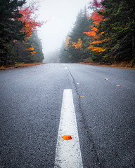 ACADIA MYSTIQUE (pidalaphoto) Tags: autumn northeast acadianationalpark mist fog acadia maine fall coast