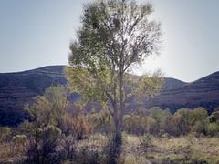 late afternoon at lower TAPCO (EllenJo) Tags: pentaxqs1 october17 2016 ellenjo ellenjoroberts pentax sunset lateafternoon afternoon lowertapco verderiveratclarkdale clarkdaleaz arizona