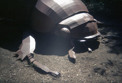 - (_barb_) Tags: holga135 holga fujicolor100 deancolls alexanderthegreat sculpture mcclellandsculpturepark beetle film 35mm art langwarrin
