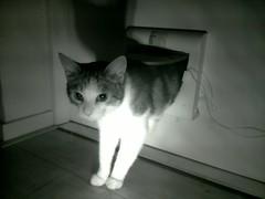 20161019-001913-i-1 (Catflap central) Tags: cat catdoor katzenklappe raspberry pi camera cats catflap kattenluik catflapj2nnl pet meow