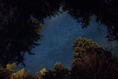 Starry Sky (R@dekhiv) Tags: stars star starry sky night lviv skole ukraine mountains beskydy beskyds    carpathians    forest woods longexposure
