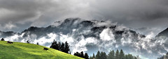 Alp Zgler (Swiss.piton (B H & S C)) Tags: alpzgler alpen berg nature landscape landschaft cows khe myswitzerland olympusdigitalcameraomdem5ii olympus75mmf18microfourthirdslens microfourthirdsphotography olympusomdem5ii olympusomdem5miizuikom75mmf18 olympuszuikodigitalclub 2x1panoramastitching panorama swisslandscape eastswitzerland toggenburg hochistpetrerzell
