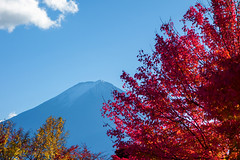 Autumn leaves and blue sky and the Mount Fuji (sonica@2006) Tags: autumn leaves blue sky mount fuji this combination is it best japan yamanashi koyo fall xm1 xf35mm fujifilm fujinon