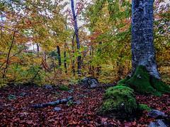 Eslovenia-2016-299 (Jos Manuel Garcs) Tags: knejanjiva cerknica eslovenia si