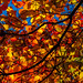 Jackson Pollock Autumn