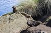 NZ 2794 - Nueva Zelanda - Peninsula Otago (Jano Escuer) Tags: nuevazelanda oceanía