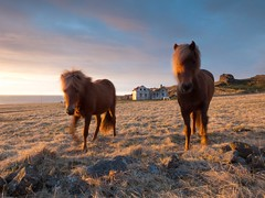 Iceland - May 2015 (3 Wild Sheep) Tags: 2016 iceland osar vatnsnespeninsula clouds farm horses house midnightsun skyscapes spring structure