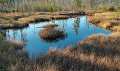 lily pond - Magnetic Rock Trail 11-6-16 (photo synth) Tags: lilypond novemberpond magneticrocktrail pond hikingtrail