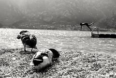 Erika e Andrea (marco-ruzza) Tags: lagodigarda tuffi animali spiaggia bambini navene papere blackdiamond biancoenero