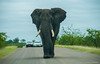 The road is mine (Renzo Ottaviano) Tags: krugerpark sudafrica limpopo south africa renzo lorenzo ottaviano kruger elephant elefante