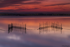 My Dreamed Sunset IV. [Explored & FP 11-17-2016] (dasanes77) Tags: canoneos6d canonef1635mmf4lisusm tripod landscape seascape cloudscape waterscape clouds red bluehour horizon lake nets reflections shadows water calm peace tranquility canes valencia albuferaofvalencia night longexposure abstract sky heaven buoyant