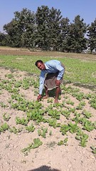 2016 Mr Doman 3 (Foods Resource Bank) Tags: foods resource bank mennonite central committee bicws food security charitable humanitarian hunger women children men farmers kitchen gardens income rice training self help