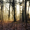 Young tree (pszcz9) Tags: przyroda nature natura las forest drzewo tree gałąź branch słońce sun forestimages beautifulearth sony a77 grudzień december bokeh