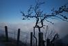the art of nature (Toni_V) Tags: m2402582 rangefinder digitalrangefinder messsucher leica leicam mp typ240 28mm elmaritm elmaritm12828asph hiking wanderung randonnée escursione vitznaurigikulmarthgoldau schwyz rigikulm fog nebel mist nebelmeer seaoffog alps alpen fence zaun switzerland schweiz suisse svizzera svizra europe frost winter ©toniv 2016 161227