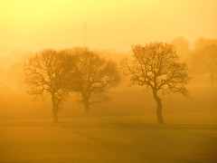 Misty Trees In The Sunset (Gary Chatterton 3 million Views Thank You All) Tags: mist fog trees countryside england weather weatherpictures sunset sunshine evening exploreinterestingness explore