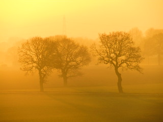 Misty Trees In The Sunset