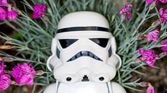 Dreaming (kondex vs mechagodzilla) Tags: star wars stormtrooper lego minifig macro closeup bokeh dof
