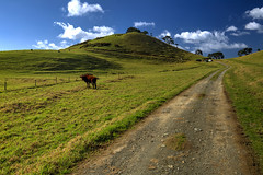 Independence Day (hapulcu) Tags: newzealand northisland nz northland whangarei kiwi winter road newlens