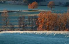 Premiers rayons de soleil (martine_ferron) Tags: gel hiver automne campagne soleil arbre matin champ