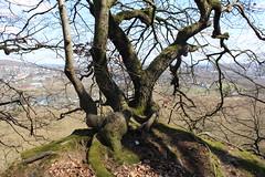 Baum über dem Ruhrtal