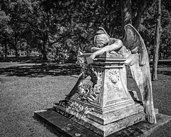 Angel of Grief (Blakeney) (Mike Schaffner) Tags: angel angelofgrief bw blackwhite blackandwhite blakeney burialground cemetery grave gravestone graveyard grief grovehill memorial monochrome monument sculpture sorrow statue tombstone weeping dallas texas unitedstates us