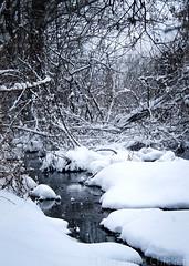 December stream (3) (Little Blind Chicken) Tags: winter spring december stream snow snowy snowfall kharkiv ukraine украина харьков