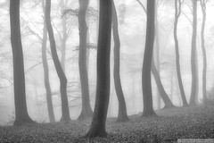 Foggy woodland (EVERY SO OFTEN) Tags: fog december woodland woods beech chilterns buckinghamshire mood foggy visibility haze silent bw black white structure monochrome winter outdoors rural sony a7r fe55mm fade ghost bradenham wood trees landscape