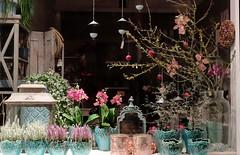 Flowers of Winter - Winterblumen (Sockenhummel) Tags: fuji x30 fujifilm finepix fujix30 winter winterblumen blumenpracht farbenpracht blumenladen flowershop schaufenster shopwindow dekoration decoration blumen flowers laden