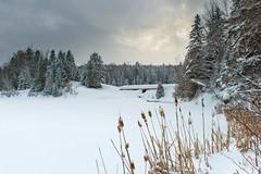 Paysage D'hiver (martinmenard757) Tags: martin menard