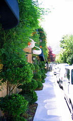 "Beautiful Cultivated Sidewalk in Ashland • <a style=""font-size:0.8em;"" href=""http://www.flickr.com/photos/34843984@N07/14925906283/"" target=""_blank"">View on Flickr</a>"