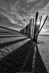 poles on the beach (robvanderwaal) Tags: light sky sun beach netherlands strand fence licht sand nederland pole poles lucht zon maasvlakte zand hek 2014 paal hekje maasvlakte2 rvdwaal robvanderwaalphotographycom