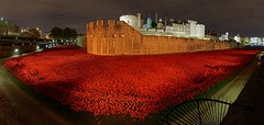 Poppies@Tower Of London_01 (sjnewton) Tags: uk november red england london castle art night ceramic nikon installation poppies rememberance moat greatwar toweroflondon 2014 d600 tompiper centenery paulcummins 1635mmf4gvr towerpoppies bloodsweptlandsandseasofred 888246