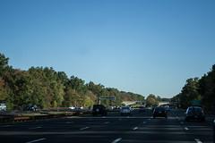 Jersey Highway Jungle