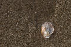 Concha chula (donseveriano) Tags: beach huelva playa andalucia panasonic concha puntadelmoral fz28