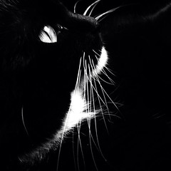 Cosmo (life stories photography) Tags: ohio pet cat square october kitty tuxedo squareformat cosmo iphone 2014 iphoneography instagramapp uploaded:by=instagram