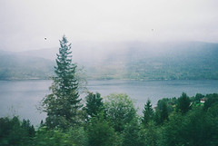 (Brbara Lanzat) Tags: trip trees green film norway analog train 35mm landscape grain places yashica traintrip yashic