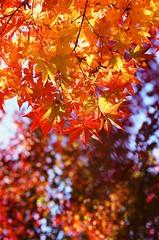 Colorful Autumn ~ (Jung_W) Tags: