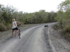 Galápagos - Isabela-126