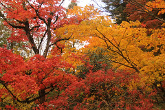Fall at the Japanese Gardens