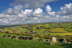 On top of the world (expolred) (Getty listed) (Alan10eden) Tags: autumn blackandwhite green field grass animals clouds rural canon landscape countryside milk october view cows natural farm sigma bluesky down pasture northernireland farmer agriculture dairy patchwork pastoral 1770 livestock herd grazing holstein ulster paddock freerange armagh newry animalwelfare 70d stripgraze alanhopps