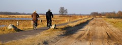 Drenthe = Dutch biker's paradise (HansHolt) Tags: trees water netherlands bikepath bike forest cycling cyclists bomen paradise bikes bicycles peat veen heath bog cyclepath bos fen ven province fietsen bikers heide drenthe fietspad fietsers paradijs provincie canonef24105mmf4lisusm sandyroad zandweg canoneos6d cyclingprovince fietsprovincie
