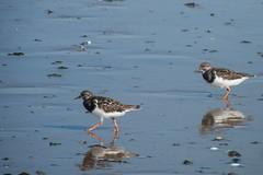 Buscando comida (donseveriano) Tags: bird beach birds huelva aves andalucia panasonic ave pajaros pajaro puntadelmoral fz28 playaaves