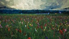 Gladioli Flowers (Retro_King) Tags: art germany painting country impression flowersplants topazimpression