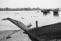 The birds (heshaaam) Tags: heron birds boats bahrain dhow arad muharraq