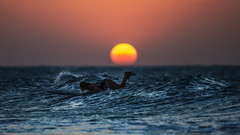 JERI (CUMBUGO) Tags: ocean sunset sea brazil people sun sunlight water girl nikon surf jericoacoara sundown wave surfing surface 300mm nikkor f28 jeri d800 d800e