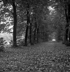 bosco (serdor) Tags: parco hasselblad lombardia ilford fp4 bianconero monza 500cm pellicola analogico