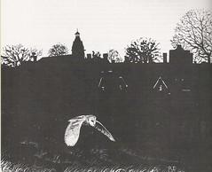 Barn Owl (Tyto alba), by Roy Weller